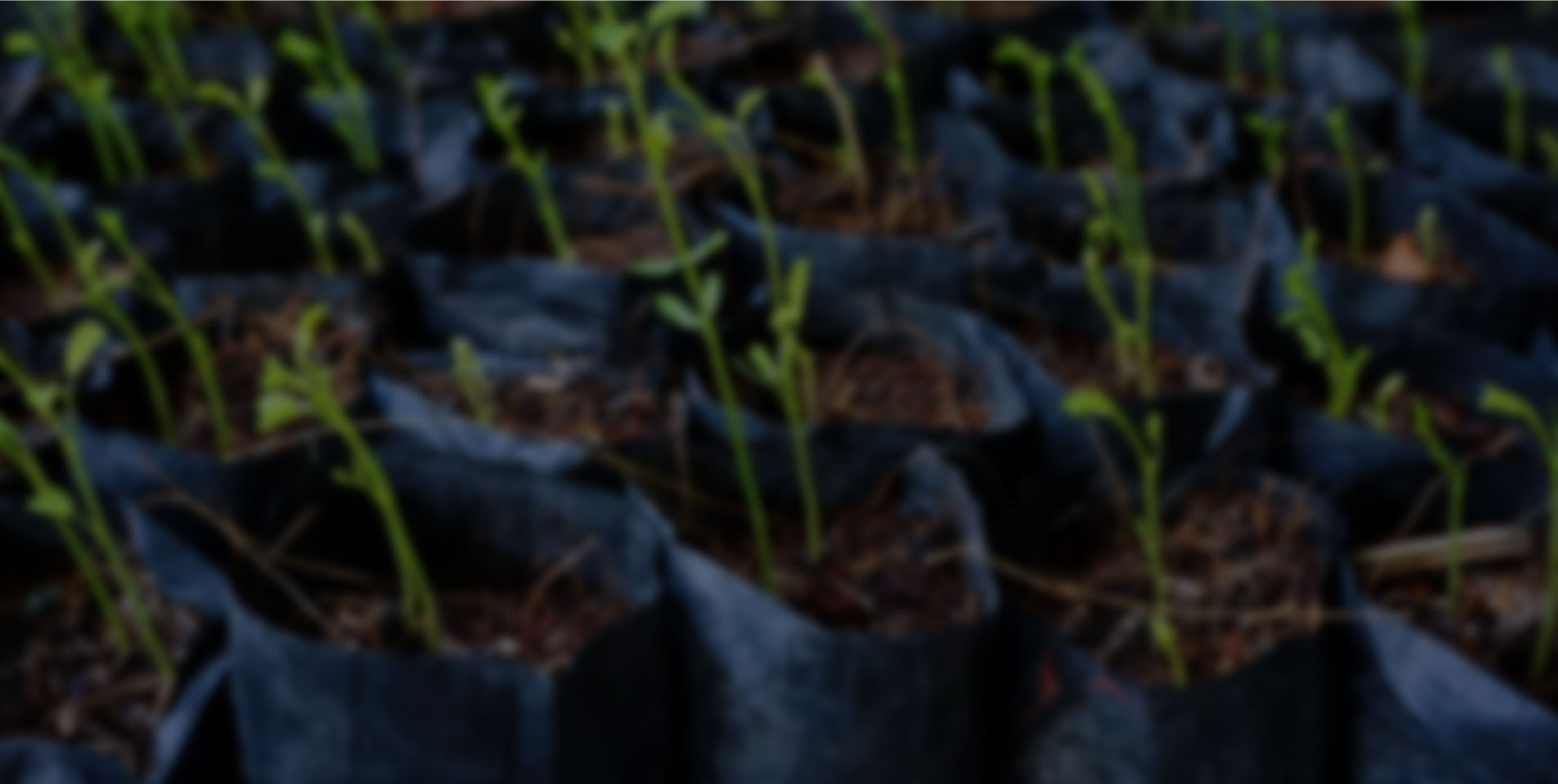 http://34.196.8.203:80/sites/default/files/revslider/image/polytec-agroindustria.jpg